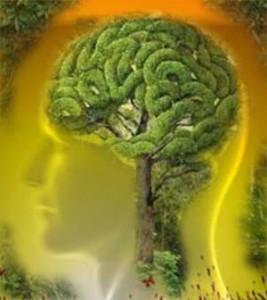 cervello1-300x336